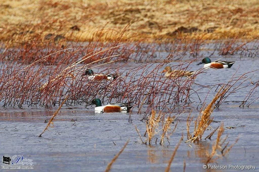 Spring 202 migration